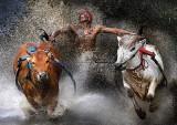 bull7