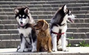 dogs_growing_up_04