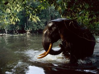 windyforest-elephant-water_26391_600x450