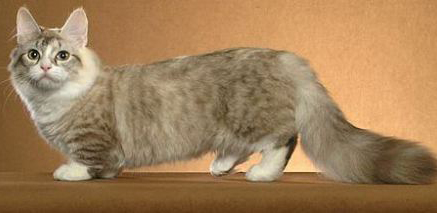 munchkin-cat6