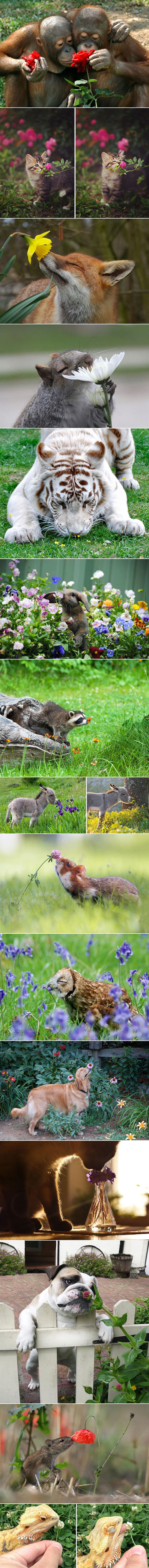 animals-smelling-flowers