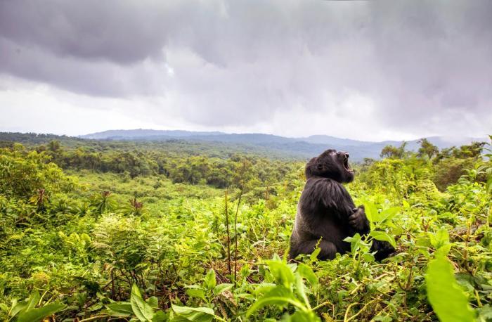 ng2 Rwanda
