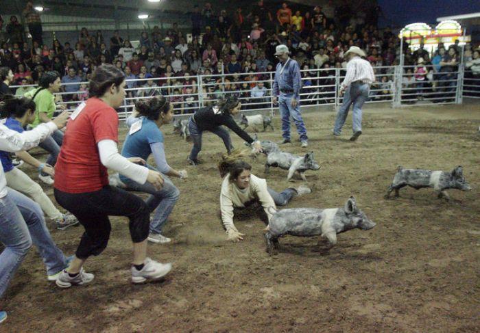 cattless (2)