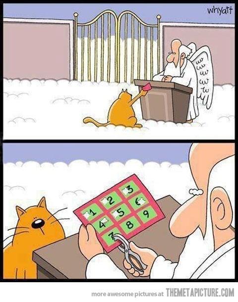 catts3