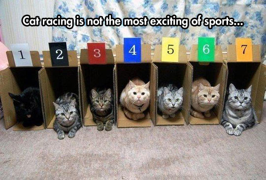 cool-cat-racing-sport-box-numbers
