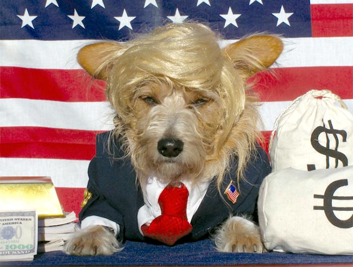 Trump eski danışmanına Twitter'dan 'köpek' dedi