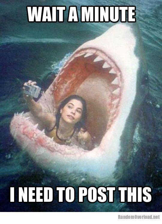chuck shark1