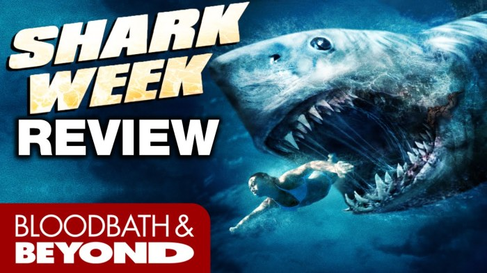 chuck shark2