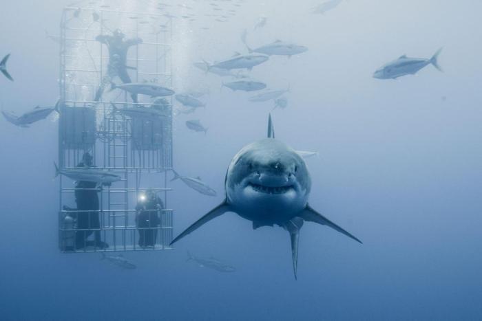 chuck sharkz