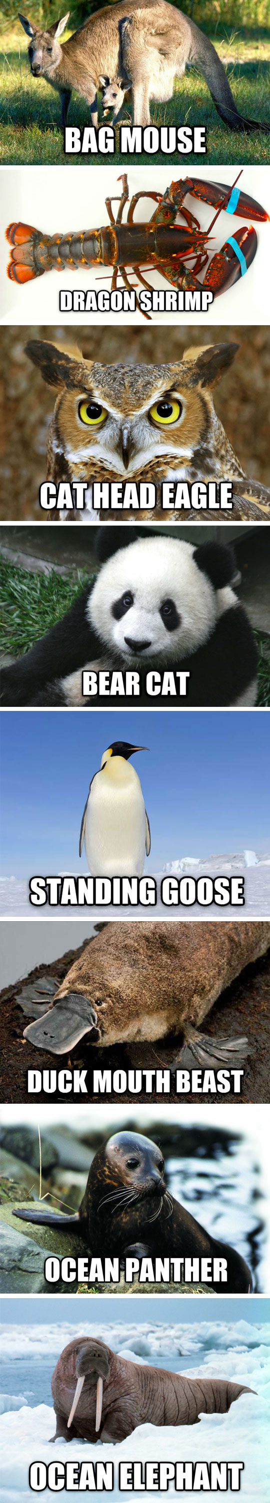 funny-chinese-animal-words-weird