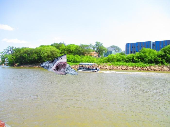 shark done (4)