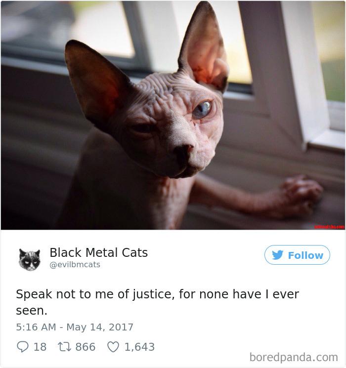 cats12
