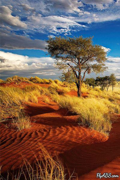 desert soth africa