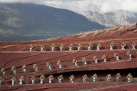 china tea haulers