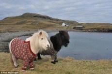 ponies2