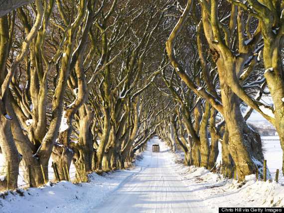 DARK-HEDGES-IRELAND-570