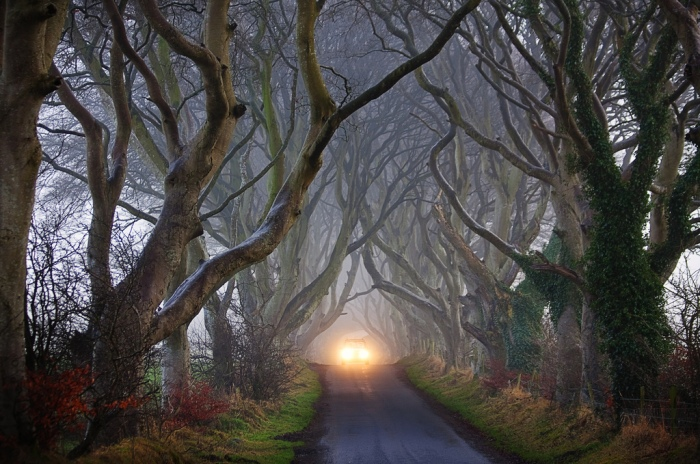dark-hedges-reland-alley-beautiful2