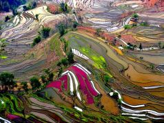cliffsterraced-rice-field-china_21087_600x450