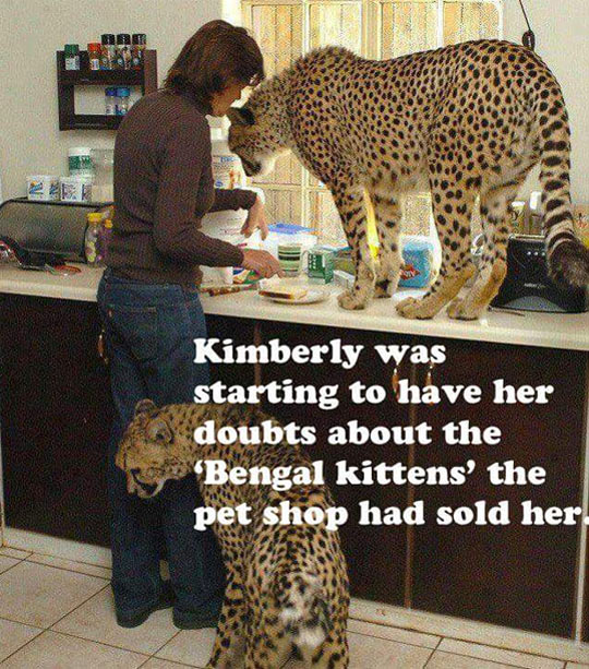 funny-cheeta-kitchen-cat