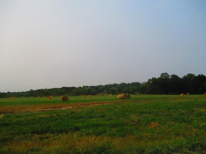 rural (2)