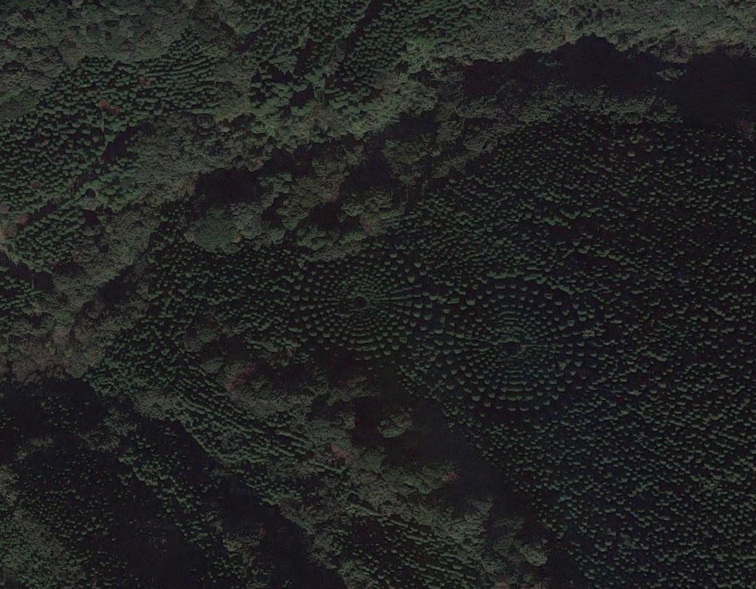 aaaajapan-tree-crop-circle-4
