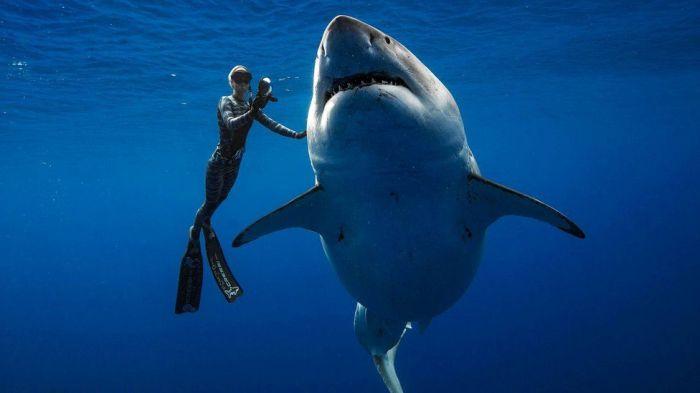 ashark