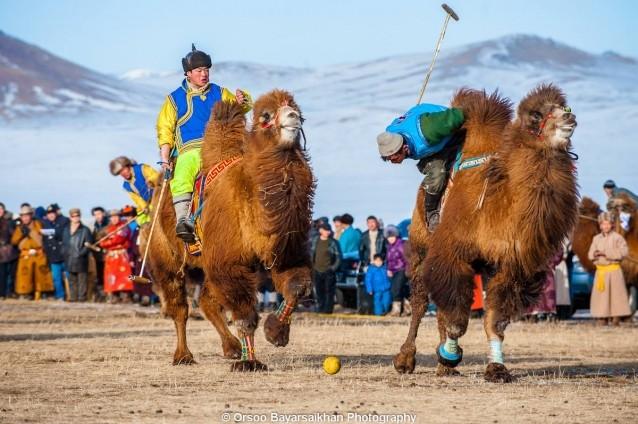 camel7 polo