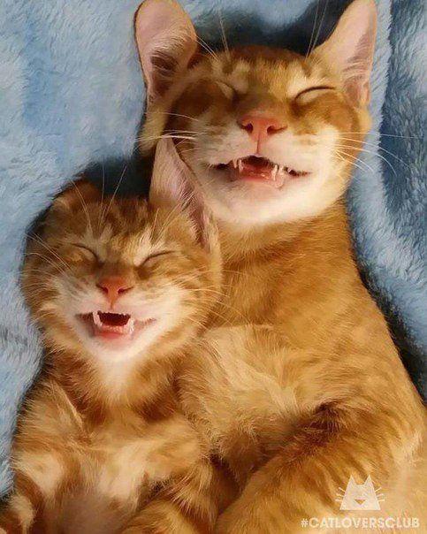 cats1