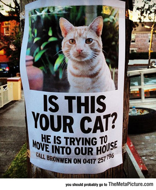 cool-sign-cat-lost-poster