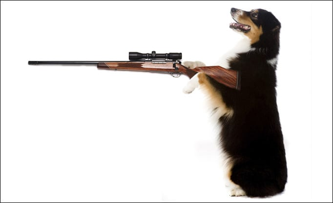 dog_with-shooter_6_1084749a