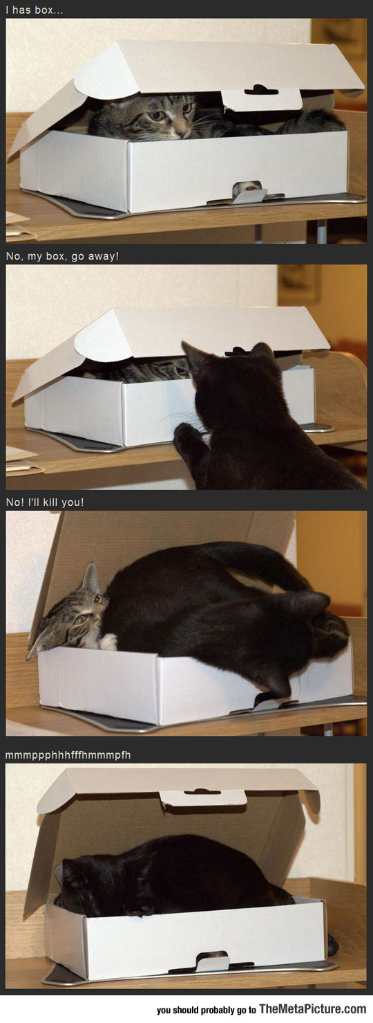 cool-cats-fighting-sleeping-box