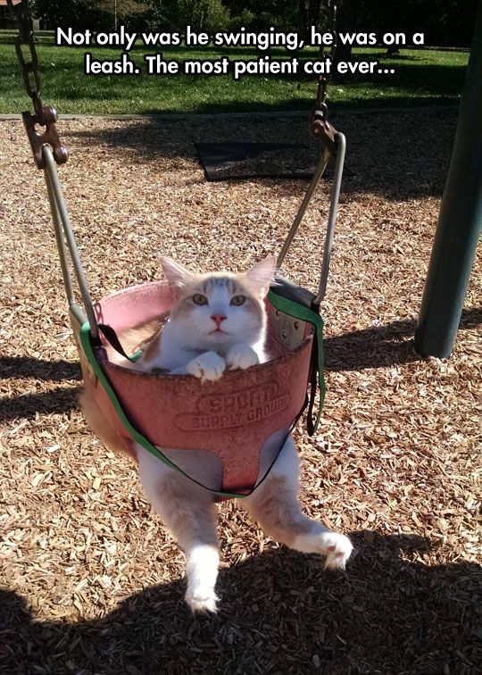 funny-cat-toes-swing-park-cute